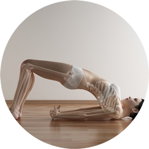 Yoga Seminar Yoga Anatomie Seminar