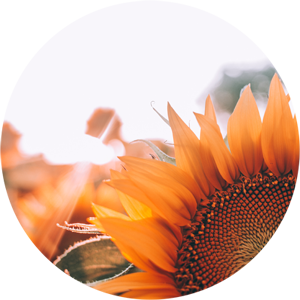 Yoga Blog, Yoga Artikel & Yoga Berichte